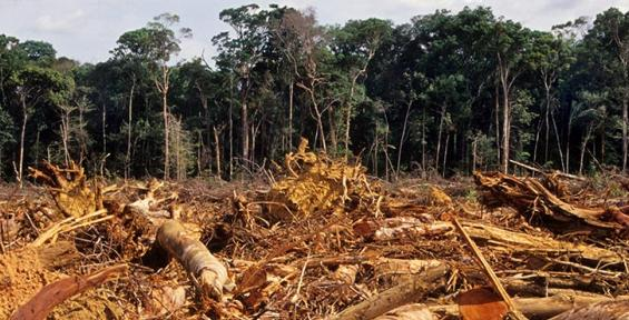 Tropical deforestation accounts for about 10 percent of the world's global warming emissions